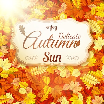 Jesienne liście z delikatnym jesiennym słońcem.
