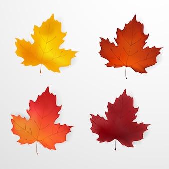 Jesienne liście. zestaw jesiennych realistycznych, kolorowych liści klonu