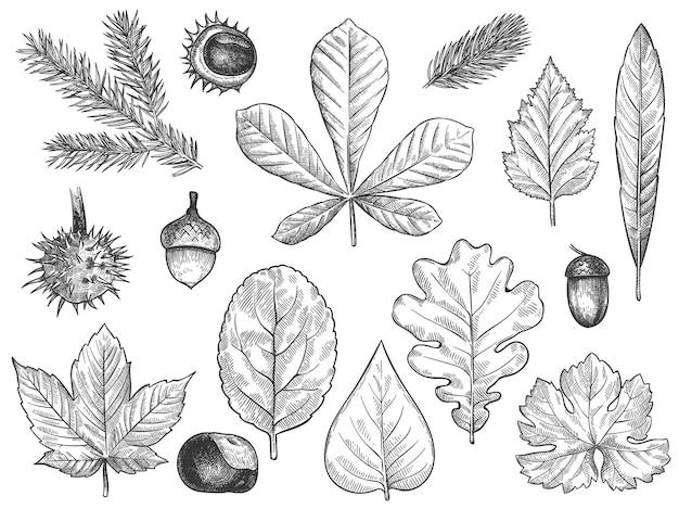 Jesienne liście zestaw szkiców
