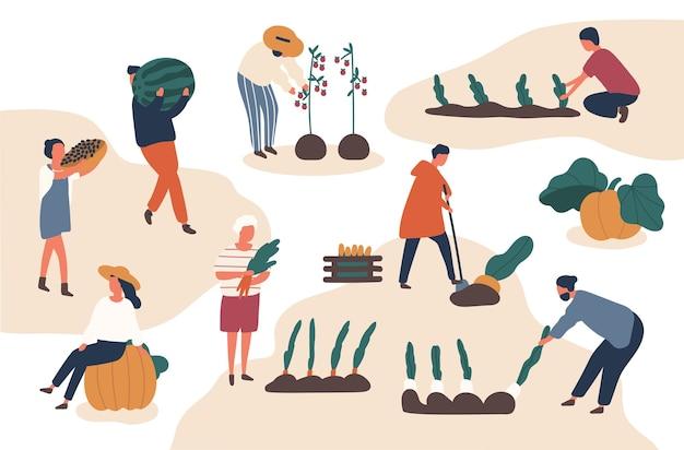 Jesienne zbiory płaskie wektor zestaw ilustracji. rolnicy pracujący w polu. zbiory owoców i warzyw w sezonie jesiennym, zbiór żniw