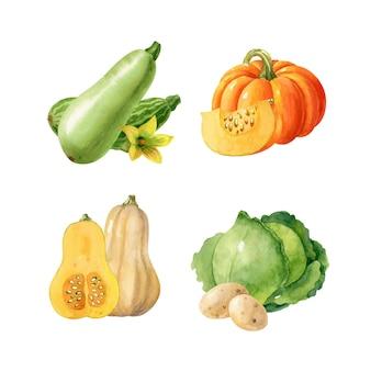 Jesienne żniwa ilustracja jedzenia z dyni kapusty ziemniaków dyni handdrawn clipart