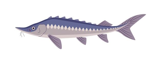 Jesiotr ryby podwodne dzikie zwierzęta na białym tle