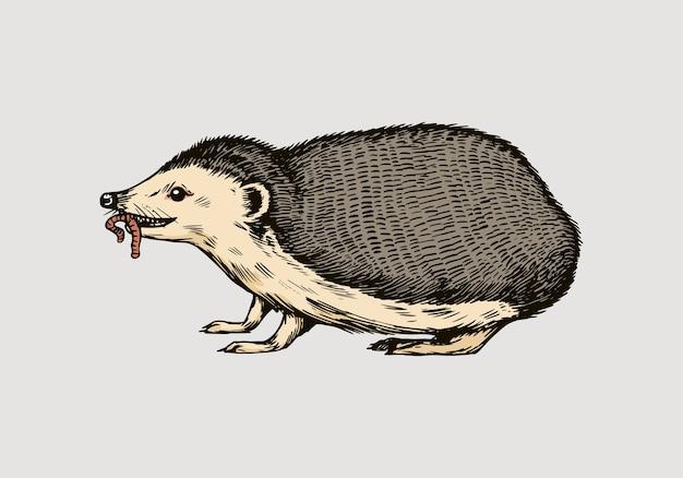 Jeż lub kolczaste zwierzę leśne z robakiem