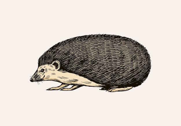Jeż lub kolczaste zwierzę leśne