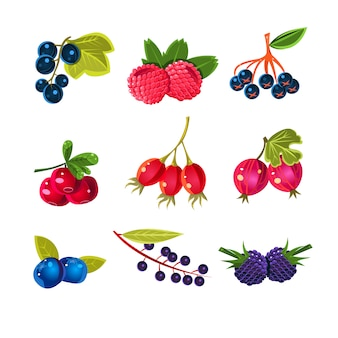 Juicy colorful berry set