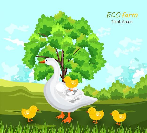 Kaczka i pąki w gospodarstwie ekologicznym