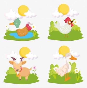 Kaczka kogut koza trawa słońce zwierzęta gospodarskie