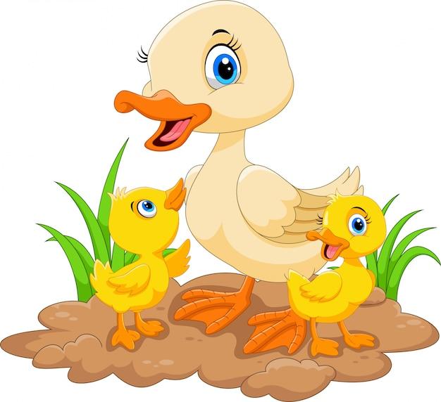 Kaczka matka i kaczątka