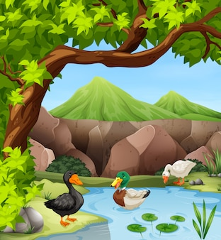 Kaczki pływa w stawie