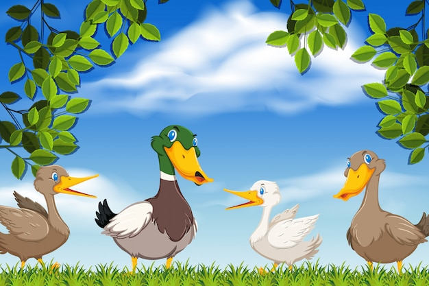 Kaczki w scenie przyrody