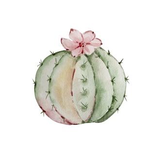 Kaktus akwarela boho na białym tle. ilustracja kwiat do projektów, kart okolicznościowych i zaproszeń.