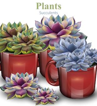 Kaktus kwitnie tło, rośliny dorośnięcie w czerwonych garnkach
