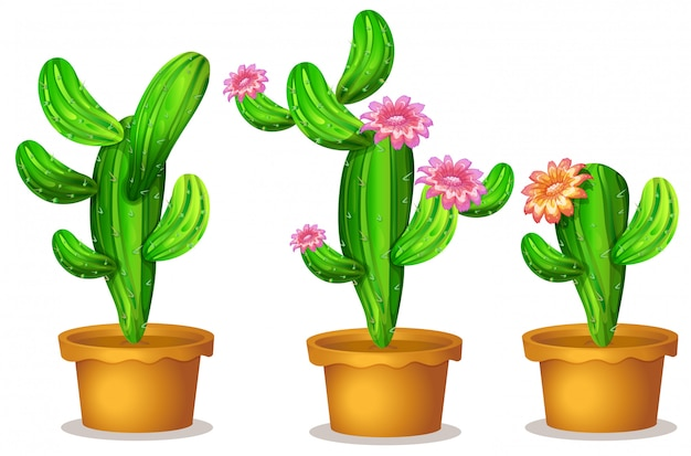 Kaktus w doniczce