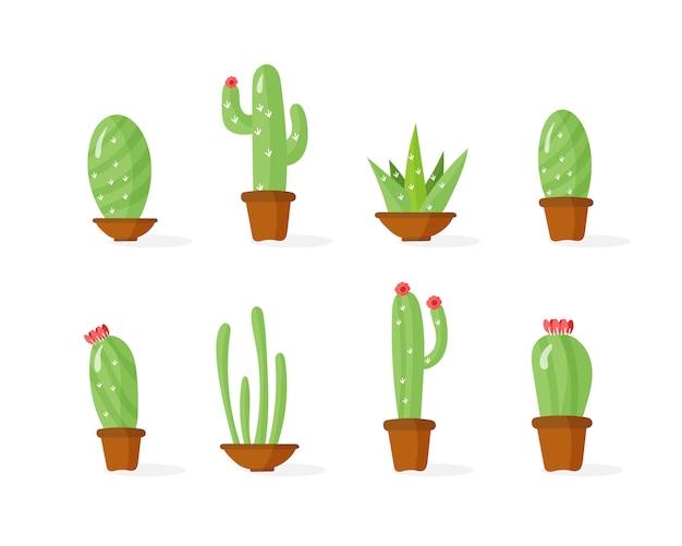 Kaktus w doniczkach, rośliny domowe z kwiatami. tropikalna roślina.