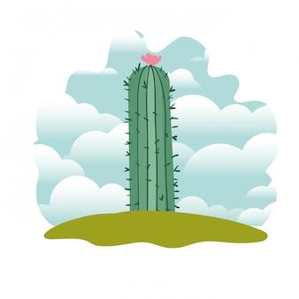 Kaktus w krajobrazie odizolowywającym