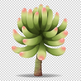 Kaktusowy kwiat na przezroczystym tle