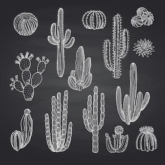 Kaktusy ustawione na tablicy