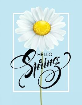 Kaligraficzny napis hello spring z wiosennym kwiatem - kwitnąca biała stokrotka.