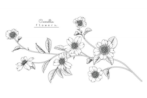 Kamelia liść i rysunki kwiatów