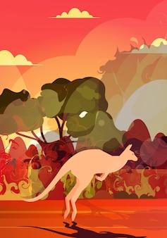 Kangur biegnący od pożarów lasów w australii zwierzęta giną w pożarze buszu pożary drzewa katastrofa naturalna koncepcja intensywne pomarańczowe płomienie pionowe