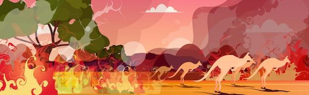Kangur biegnący od pożarów lasów w australii zwierzęta giną w pożarze buszu pożary drzewa katastrofa naturalna koncepcja intensywne pomarańczowe płomienie poziome