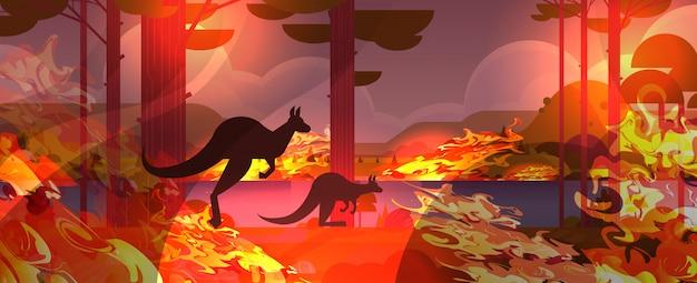 Kangur biegnący od pożarów lasów w australii zwierzęta ginące w pożarze krzak ogień palenie drzewa katastrofa naturalna koncepcja intensywne pomarańczowe płomienie poziome