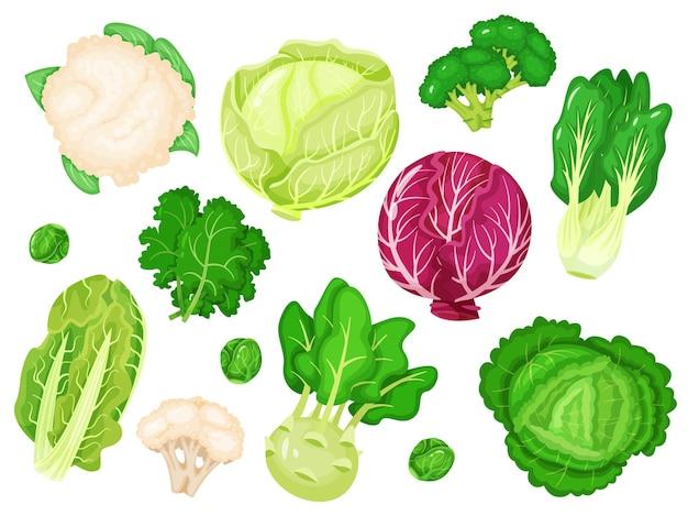 Kapusta kreskówka świeża sałata brokuły jarmuż liście kalafiora zestaw białej i czerwonej kapusty