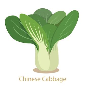 Kapusta pekińska warzyw na białym tle