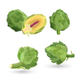 Karczoch zielony główki kwiatowe na białym tle. oset karczochów kulistych uprawiany jako pokarm. ilustracja jadalnych warzyw używanych do gotowania, herbaty ziołowej, likieru i do badań medycznych.