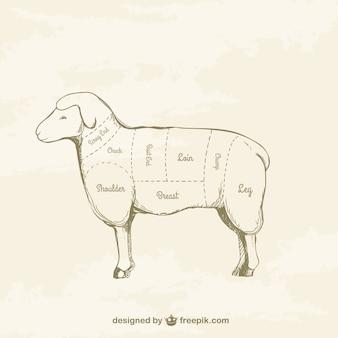 Kawałki jagnięciny rysunek