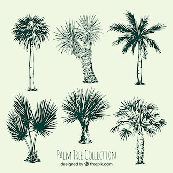 Kilka szkiców drzew palmowych
