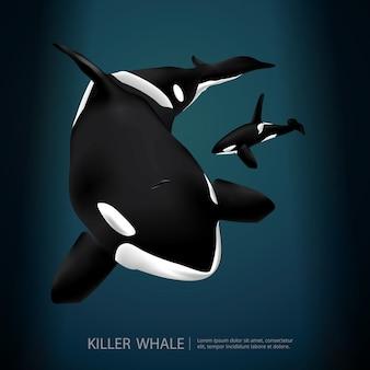 Killer whale pod ilustracji wektorowych morza