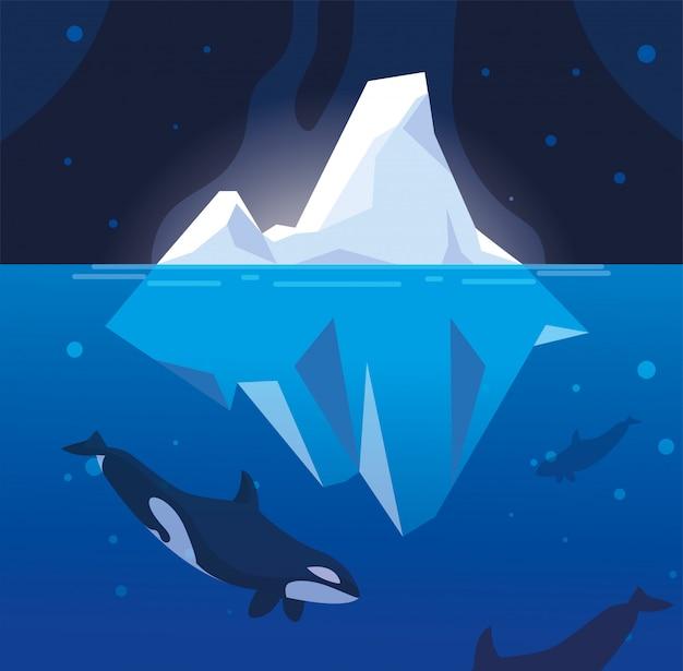 Killer whale whit iceberg pływających w morzu