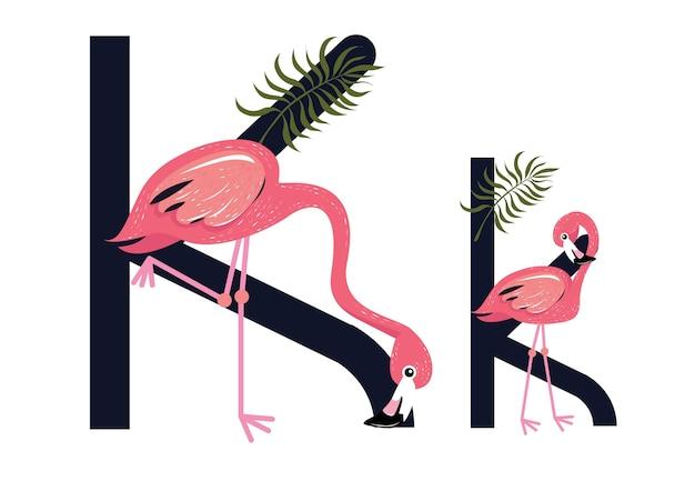 Kk flamingos