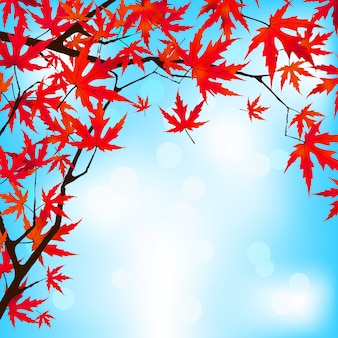 Klon japoński czerwony pozostawia przeciw błękitne niebo.