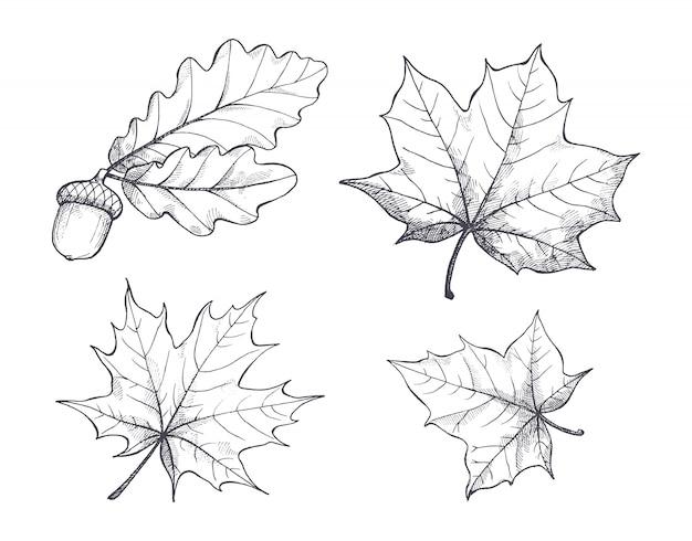 Klon monochromatyczne szkice na białym tle