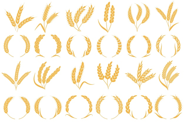 Kłosy pszenicy lub jęczmienia. zbiór złotych ziaren, pszenica łodygowa, kukurydza owies żyto jęczmień organiczna mąka rolnictwo roślin wzór chleba i kolekcja kształtów ramek