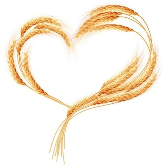 Kłosy pszenicy serce na białym.