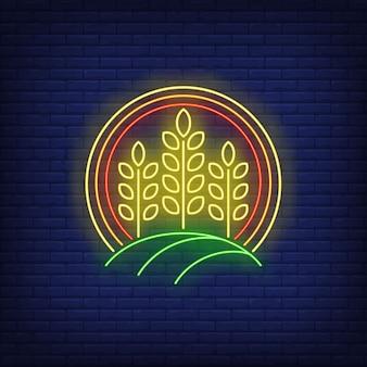 Kłosy pszenicy w kręgu neon znak.
