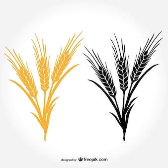 Kłosy pszenicy wektor