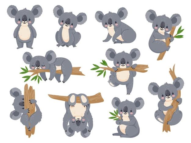Koala kreskówka. leniwe koale z eukaliptusem. małe śmieszne zwierzęta z lasów deszczowych. australijski niedźwiedź śpi na tropikalnym drzewie wektor zestaw. leniwy koala słodki i drzewny eukaliptus, dzika przyroda postaci z kreskówek
