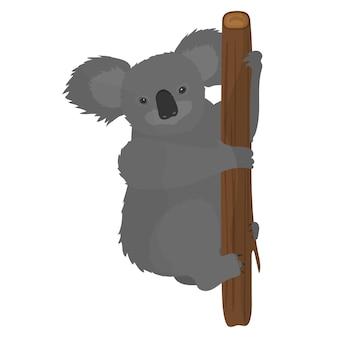 Koala trzyma się drzewa. koala na białym tle na białym tle.