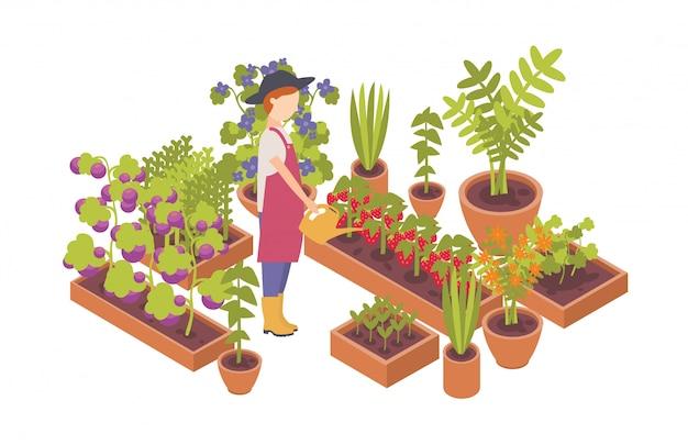 Kobieta w kapeluszu i trzymając konewka i rośliny rosnące w łóżkach ogrodowych na białym tle. ilustracja