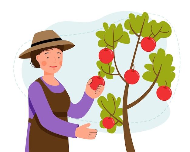 Kobieta w kapeluszu zbiera jabłka z drzewa w ogrodzie zrywając owoce