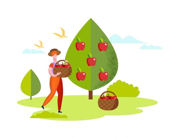 Kobieta zbiera czerwone jabłka z drzewa w koszach.