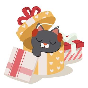 Kociak śpi w pudełku prezentowym