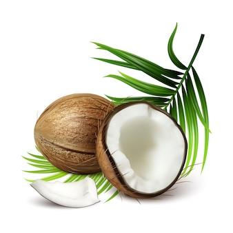 Kokos świeży tropikalny orzech i liście drzewa wektor