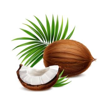 Kokosowy świeży cały i segment z białego ciała zbliżenia realistycznym składem z palmowym frond opuszcza ilustrację