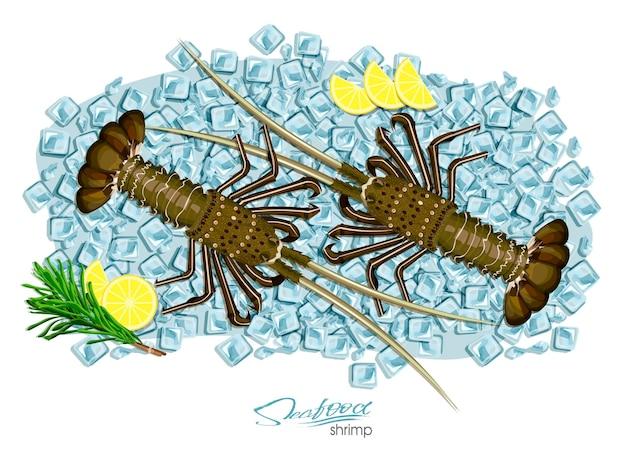 Kolczasty homar na kostkach lodu w stylu kreskówki świeży kolczasty homar ilustracja wektorowa
