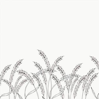 Kolec pszenicy